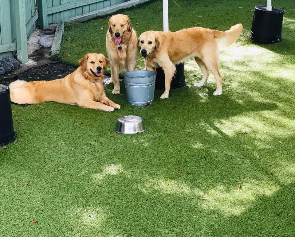 dogs at doggy day care
