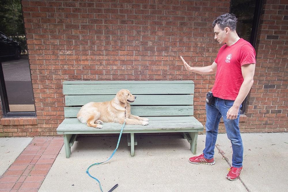 dog laying on bench