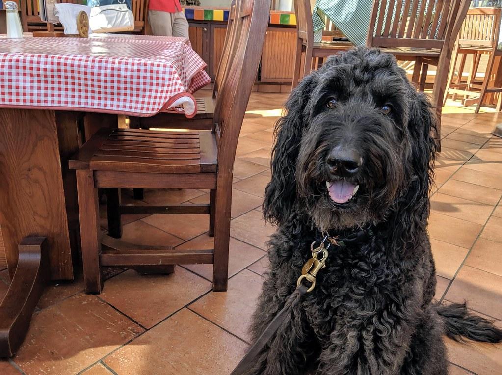 black dog in restaurant